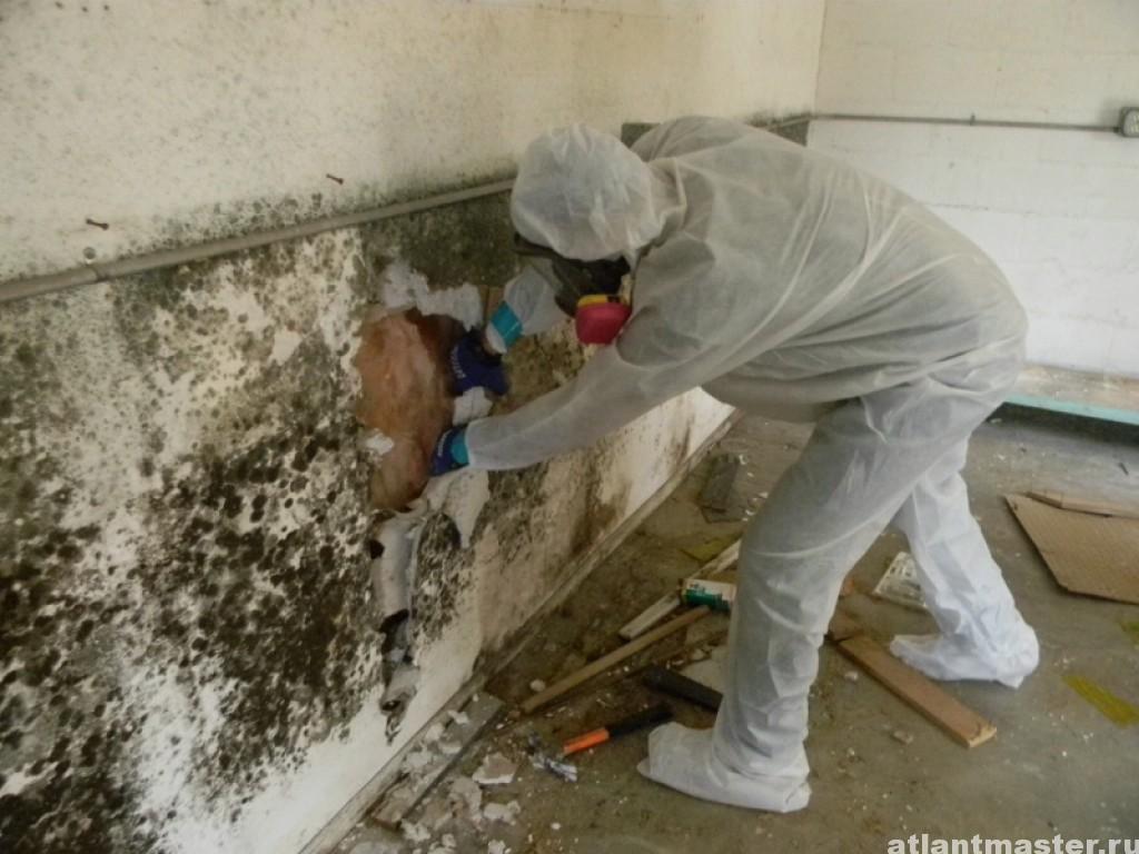 Как избавиться от грибка на стенах в доме