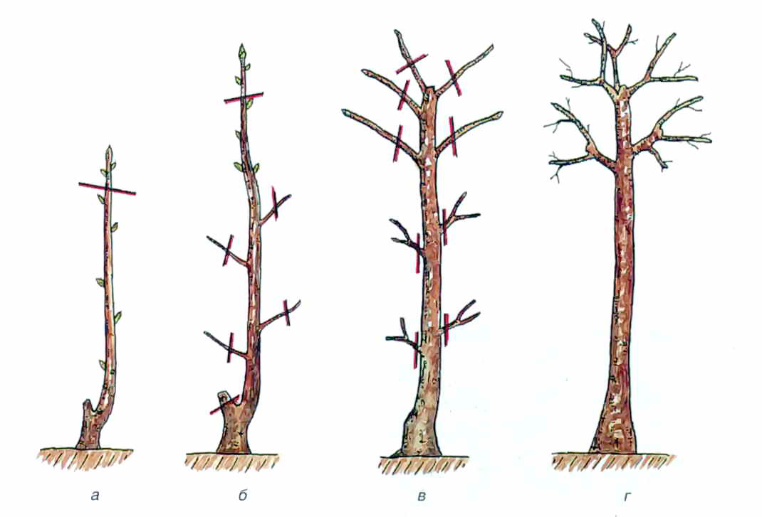 Как сделать штамбы деревьев