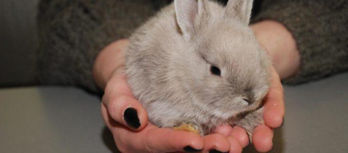 средняя продолжительность жизни кроликов